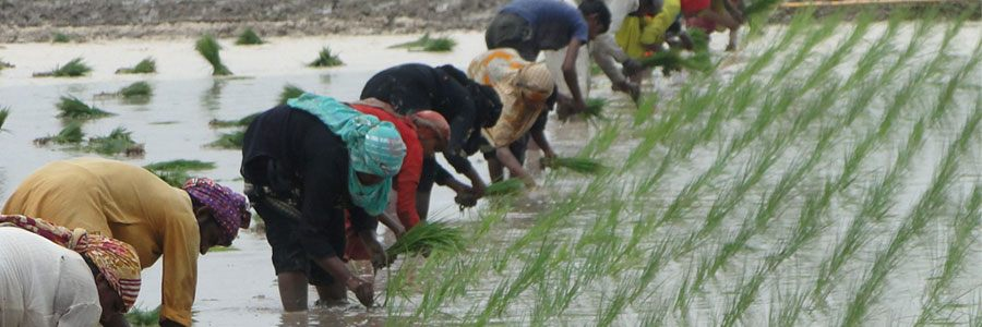 Helping Small Holder Farmers Rise Out Of Poverty