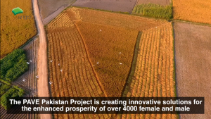 Engro - Project PAVE